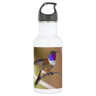 Bahama Woodstar Hummingbird Water Bottle