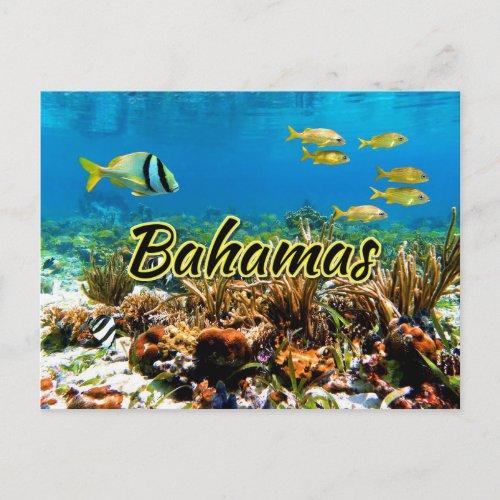 Bahamas coral reef postcard