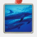 Bahamas, dophins. manchado adorno para reyes