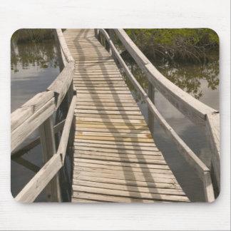 BAHAMAS, Grand Bahama Island, Eastern Side: Mouse Pad
