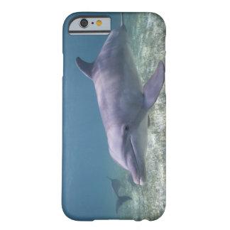 Bahamas, Grand Bahama Island, Freeport, Captive 2 Barely There iPhone 6 Case