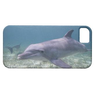 Bahamas, Grand Bahama Island, Freeport, Captive 2 iPhone SE/5/5s Case
