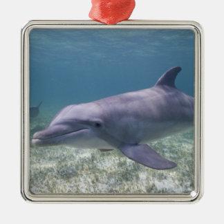 Bahamas, Grand Bahama Island, Freeport, Captive 2 Metal Ornament