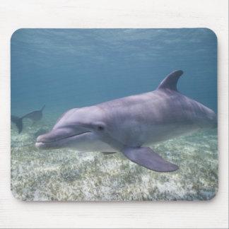 Bahamas, Grand Bahama Island, Freeport, Captive 2 Mouse Pad