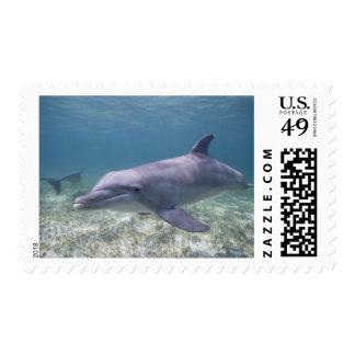 Bahamas, Grand Bahama Island, Freeport, Captive 2 Postage