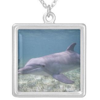 Bahamas, Grand Bahama Island, Freeport, Captive 2 Silver Plated Necklace