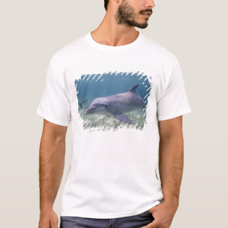 Bahamas, Grand Bahama Island, Freeport, Captive 2 T-Shirt