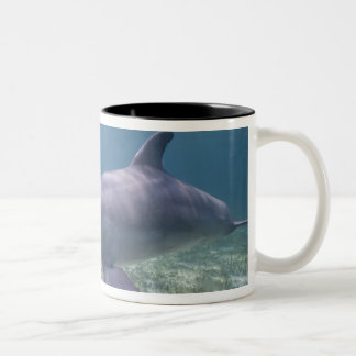 Bahamas, Grand Bahama Island, Freeport, Captive 2 Two-Tone Coffee Mug