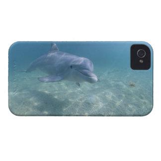 Bahamas, Grand Bahama Island, Freeport, Captive 3 iPhone 4 Case-Mate Case