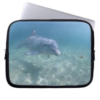 Bahamas, Grand Bahama Island, Freeport, Captive 3 Laptop Sleeve