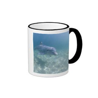 Bahamas, Grand Bahama Island, Freeport, Captive 3 Coffee Mug