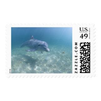 Bahamas, Grand Bahama Island, Freeport, Captive 3 Postage