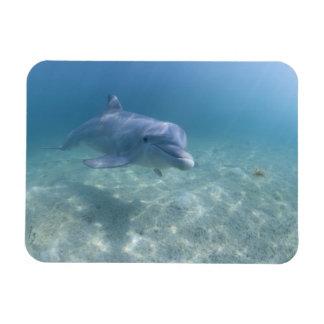 Bahamas, Grand Bahama Island, Freeport, Captive 3 Rectangular Photo Magnet