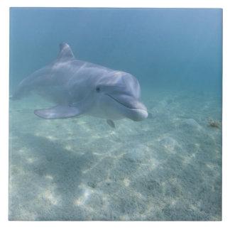 Bahamas, Grand Bahama Island, Freeport, Captive 3 Large Square Tile