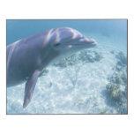 Bahamas, Grand Bahama Island, Freeport, Captive 4