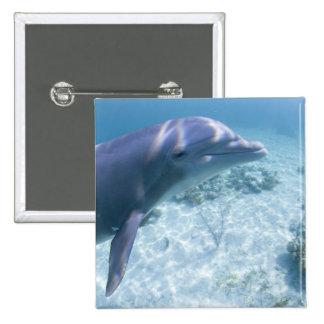 Bahamas, Grand Bahama Island, Freeport, Captive 4 Button