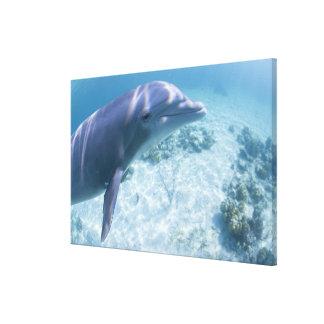 Bahamas, Grand Bahama Island, Freeport, Captive 4 Canvas Print