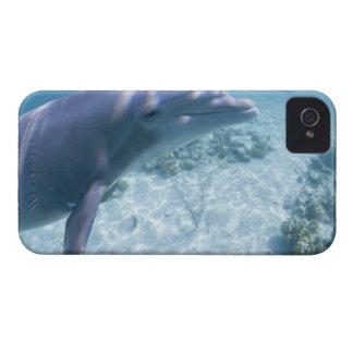 Bahamas, Grand Bahama Island, Freeport, Captive 4 iPhone 4 Case-Mate Case