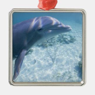 Bahamas, Grand Bahama Island, Freeport, Captive 4 Metal Ornament