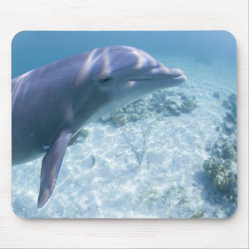 Bahamas, Grand Bahama Island, Freeport, Captive 4 Mouse Pad