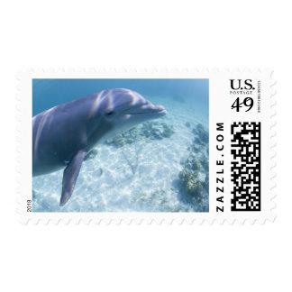 Bahamas, Grand Bahama Island, Freeport, Captive 4 Postage