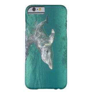 Bahamas, Grand Bahama Island, Freeport, Captive 5 Barely There iPhone 6 Case