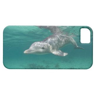 Bahamas, Grand Bahama Island, Freeport, Captive 5 iPhone SE/5/5s Case