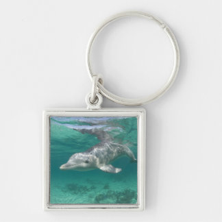 Bahamas, Grand Bahama Island, Freeport, Captive 5 Keychain