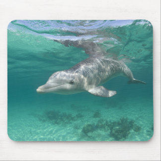 Bahamas, Grand Bahama Island, Freeport, Captive 5 Mouse Pad