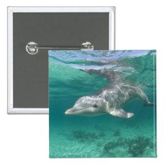Bahamas, Grand Bahama Island, Freeport, Captive 5 Pinback Button