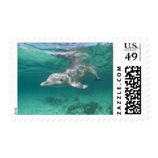 Bahamas, Grand Bahama Island, Freeport, Captive 5 Postage
