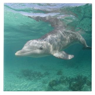 Bahamas, Grand Bahama Island, Freeport, Captive 5 Large Square Tile