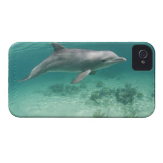 Bahamas, Grand Bahama Island, Freeport, Captive 6 iPhone 4 Covers