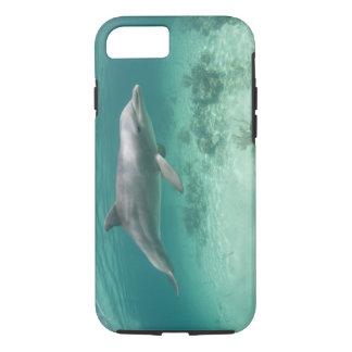 Bahamas, Grand Bahama Island, Freeport, Captive 6 iPhone 8/7 Case