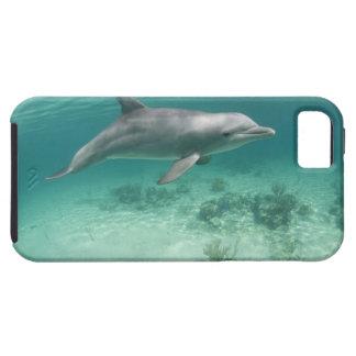 Bahamas, Grand Bahama Island, Freeport, Captive 6 iPhone SE/5/5s Case