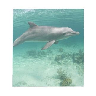 Bahamas, Grand Bahama Island, Freeport, Captive 6 Notepad