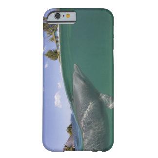 Bahamas, Grand Bahama Island, Freeport, Captive Barely There iPhone 6 Case