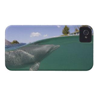 Bahamas, Grand Bahama Island, Freeport, Captive iPhone 4 Case