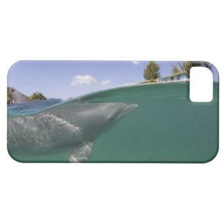 Bahamas, Grand Bahama Island, Freeport, Captive iPhone SE/5/5s Case