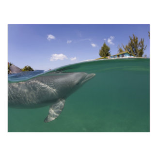Bahamas, Grand Bahama Island, Freeport, Captive Postcard