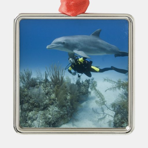 Bahamas, isla de Bahama magnífica, puerto franco, Adorno Cuadrado Plateado