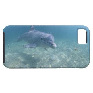 Bahamas, isla de Bahama magnífica, puerto franco,  iPhone 5 Case-Mate Fundas
