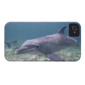 Bahamas, isla de Bahama magnífica, puerto franco, Case-Mate iPhone 4 Carcasas