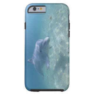 Bahamas, isla de Bahama magnífica, puerto franco, Funda De iPhone 6 Tough