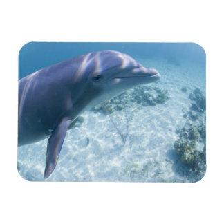 Bahamas, isla de Bahama magnífica, puerto franco,  Imanes