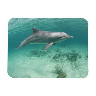 Bahamas, isla de Bahama magnífica, puerto franco,  Rectangle Magnet