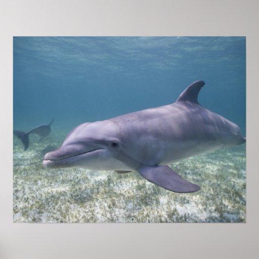 Bahamas, isla de Bahama magnífica, puerto franco,  Impresiones