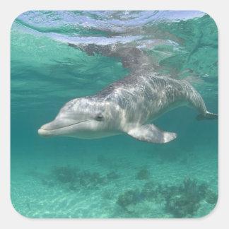 Bahamas isla de Bahama magnífica puerto franco Colcomanias Cuadradases
