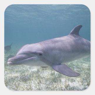 Bahamas, isla de Bahama magnífica, puerto franco, Pegatina Cuadrada