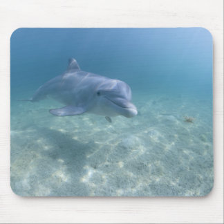 Bahamas, isla de Bahama magnífica, puerto franco,  Mouse Pad